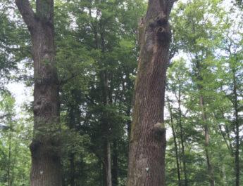 Adam und Eva Ehraer Holz